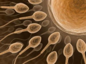 male infertility problem